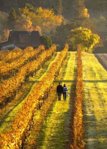 Of course, New Zealand is also famous for its wine. Photo: Ian Trafford