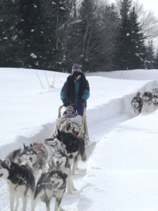 Dog sledding through the snow in Canada.